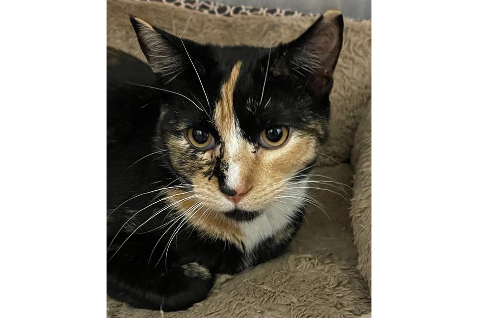 PAWS Pet of the Week – Meet Miss Weezie!